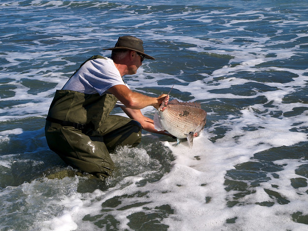 February 2013: Brent Rolston releasing a snapper into the water at Waverley, South Taranaki, New Zealand. We estimated its weight at 7 kilograms.